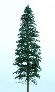 Spruce dark green 180x300