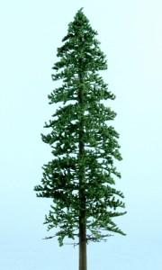 Spruce light green 180x300