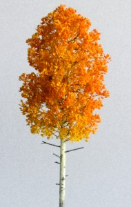 Aspen light orange 190x300