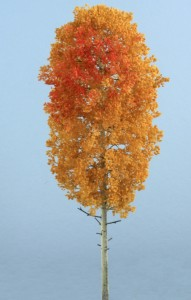 Aspen with red xx 191x300