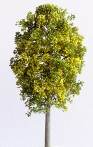 Maple light green 190x300